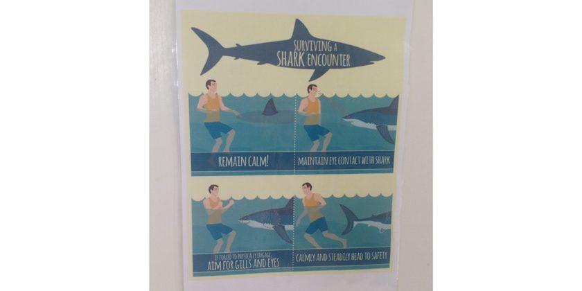 shark-spotters-poster-2