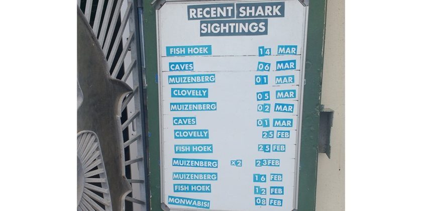 shark-spotters-poster-4