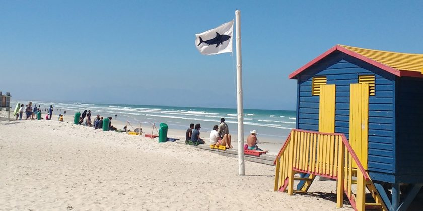 shark-spotters-white-flag